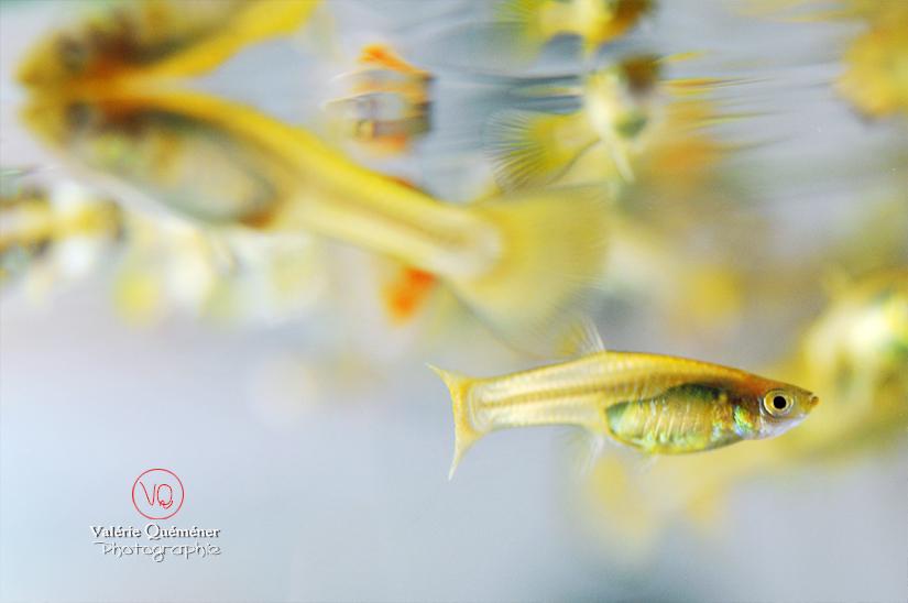 © Valérie Quéméner I Au temps de mon aquarium