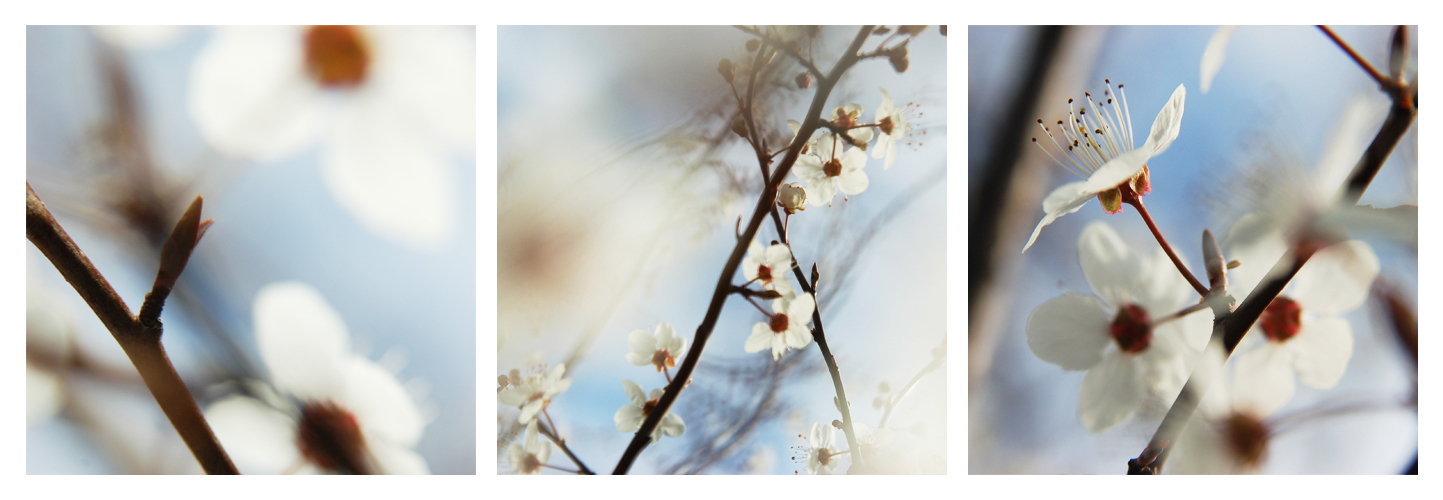 Triptyque 'Prunus'   © Valérie Quéméner