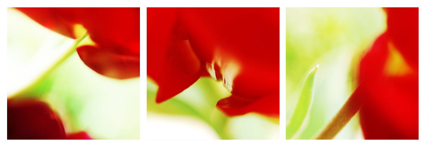 Triptyque 'Rouge tulipe'   © Valérie Quéméner