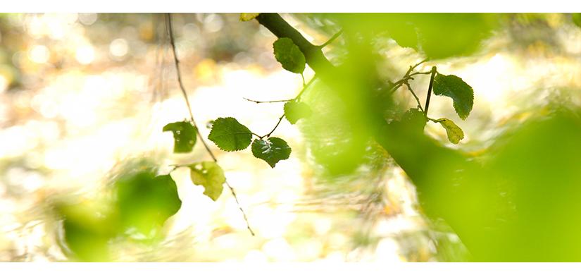 Trouble de feuilles | © Valérie Quéméner